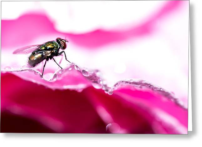 Greeting Card featuring the photograph Fly Man's Floral Fantasy by T Brian Jones