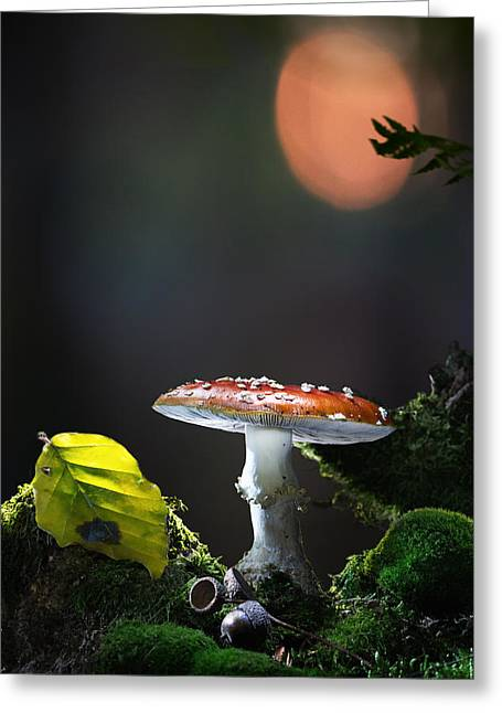 Fly Mushroom - Red Autumn Color Greeting Card by Dirk Ercken