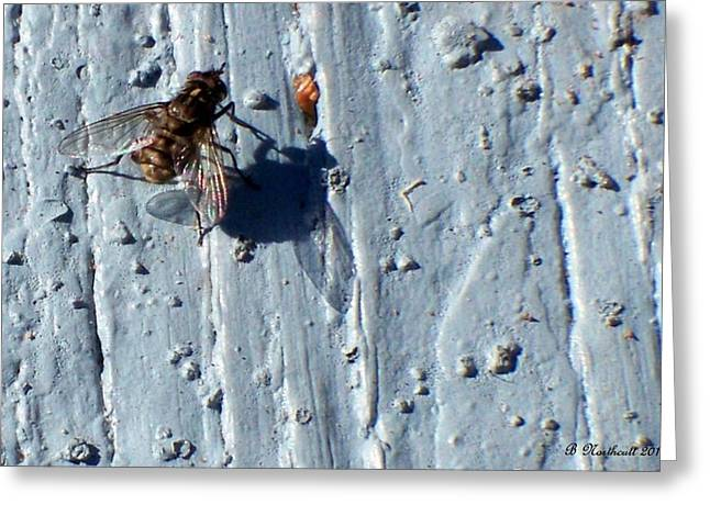 Greeting Card featuring the photograph Fly On The Wall by Betty Northcutt