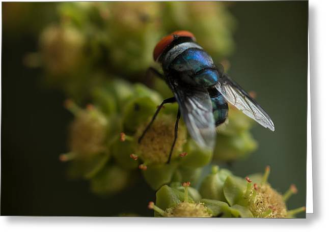 Fly  Greeting Card by Ramabhadran Thirupattur