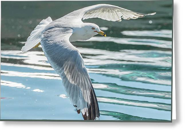 Flyby Greeting Card
