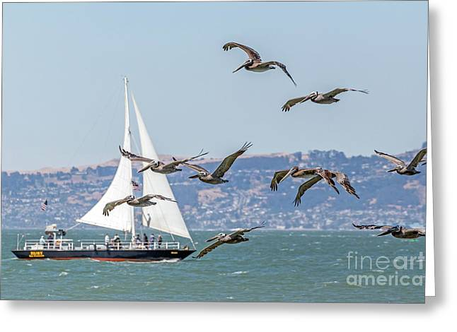 Flyby Greeting Card by Kate Brown