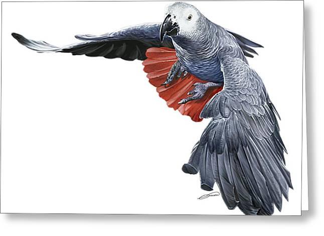 Flying African Grey Parrot Digital Art By Owen Bell
