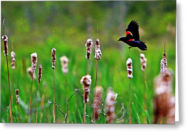 Flying Amongst Cattails Greeting Card by James F Towne