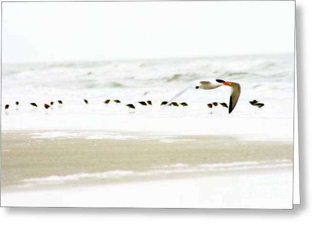 Tern In Flight Greeting Card by Angela Rath
