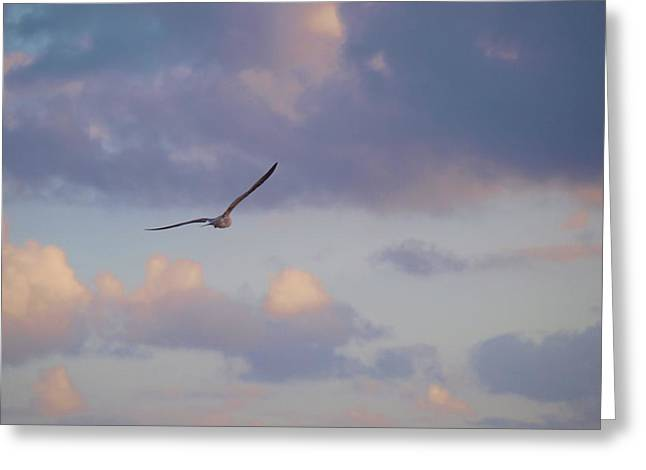 Flying Away Greeting Card by E Luiza Picciano
