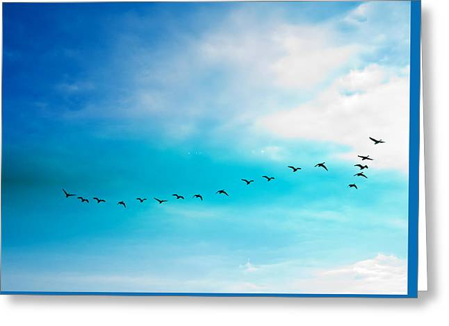 Flying Away Greeting Card by Jose Rojas