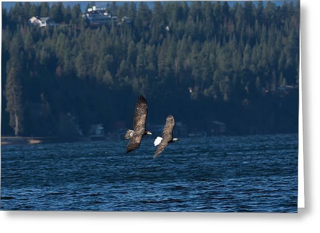 Flying Bald Eagles Greeting Card