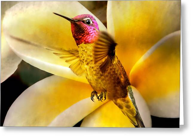 Flying Beauty Greeting Card by David Millenheft