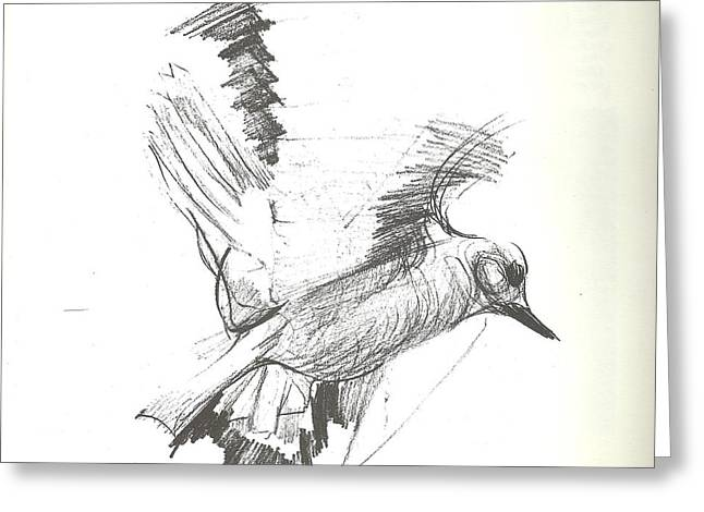 Flying Bird Sketch Greeting Card