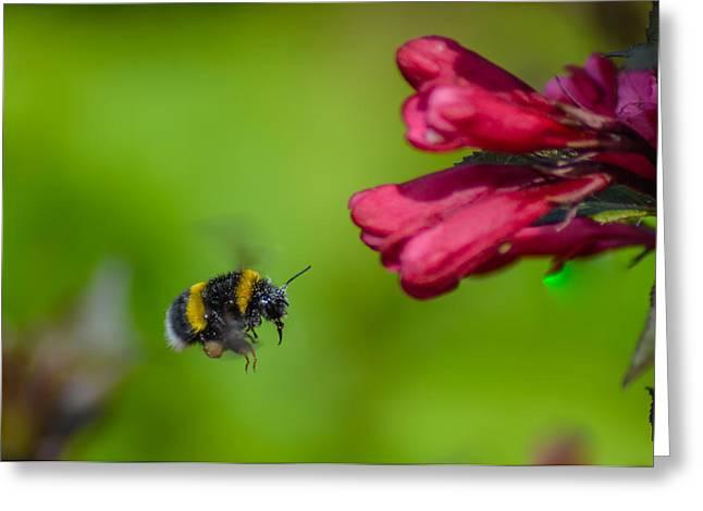 Flying Bumblebee Greeting Card by Rainer Kersten