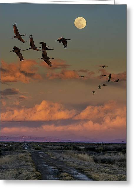 Flying By Moonlight Greeting Card