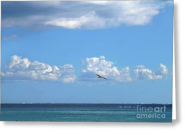 Greeting Card featuring the photograph Flying By The Sea by Francesca Mackenney