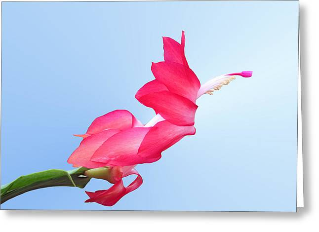 Flying Cactus Greeting Card by Kristin Elmquist