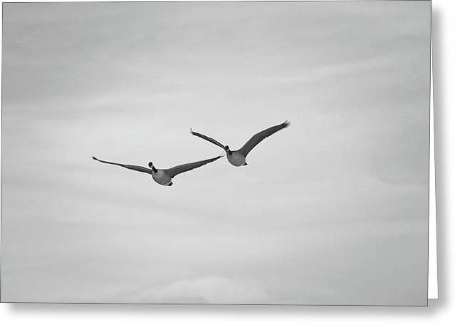 Greeting Card featuring the photograph Flying Companions by Jason Coward