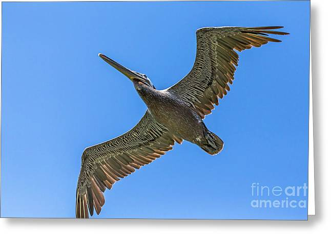 Flying Dino Greeting Card by Kate Brown