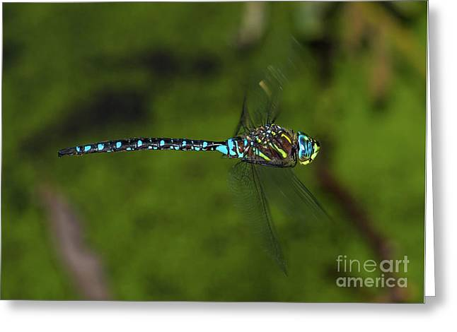 Flying Dragonfly Side View Greeting Card by Marv Vandehey