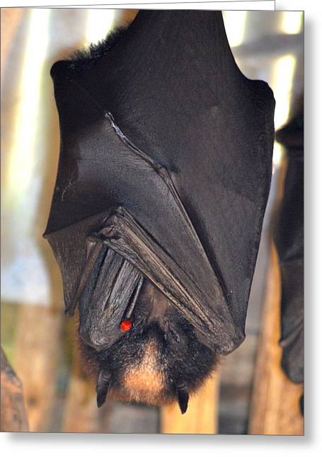 Flying Fox Bat Greeting Card by Richard Bryce and Family