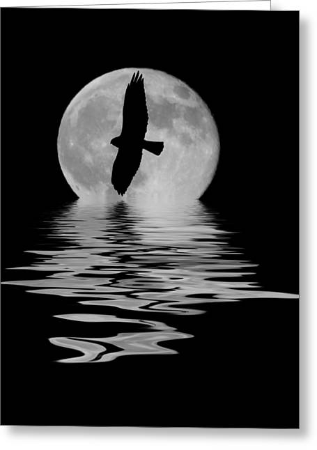 Greeting Card featuring the photograph Flying Hawk 2 by Shane Bechler