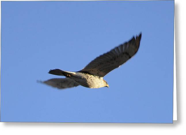 Flying Hawk II Greeting Card by Christopher Wood