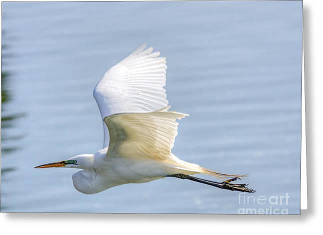 Flying Heron Greeting Card