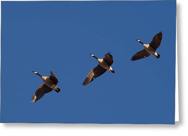 Greeting Card featuring the photograph Flying In Formation by Monte Stevens