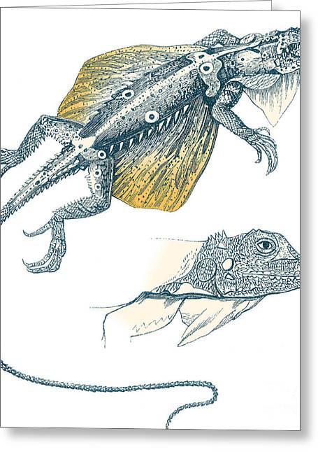 Flying Lizard Greeting Card