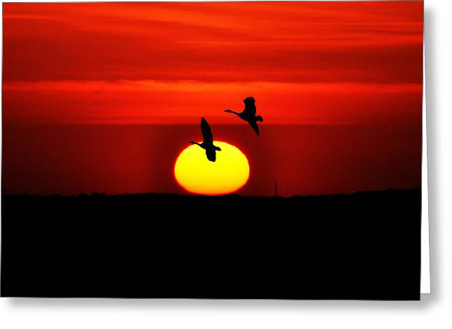 Flying North At Sunrise Greeting Card by Bill Cannon