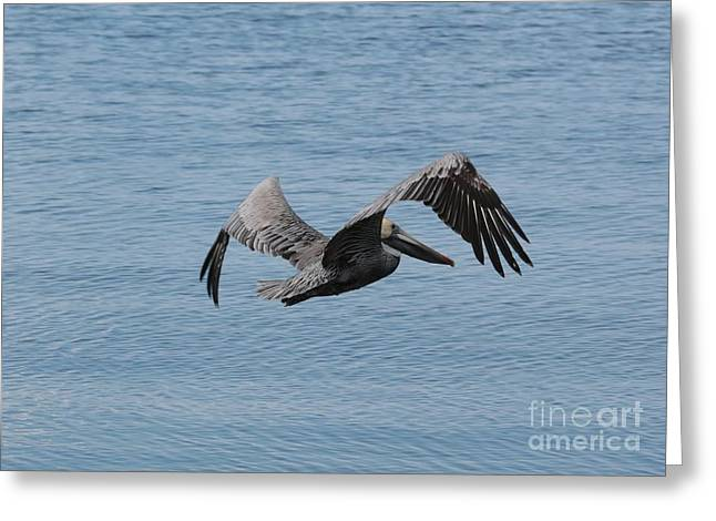 Flying Pelican Over Blue Water Greeting Card