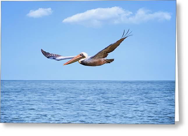 Flying Pelican Greeting Card