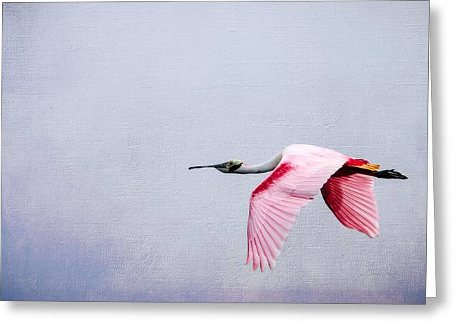 Flying Pretty - Roseate Spoonbill Greeting Card