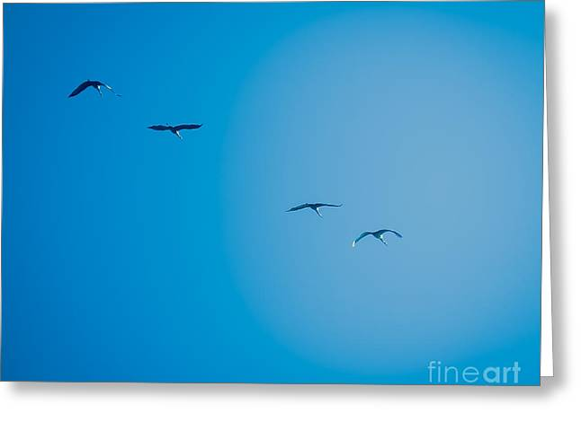 Sandhill Cranes Flying South Greeting Card by Stephanie Forrer-Harbridge