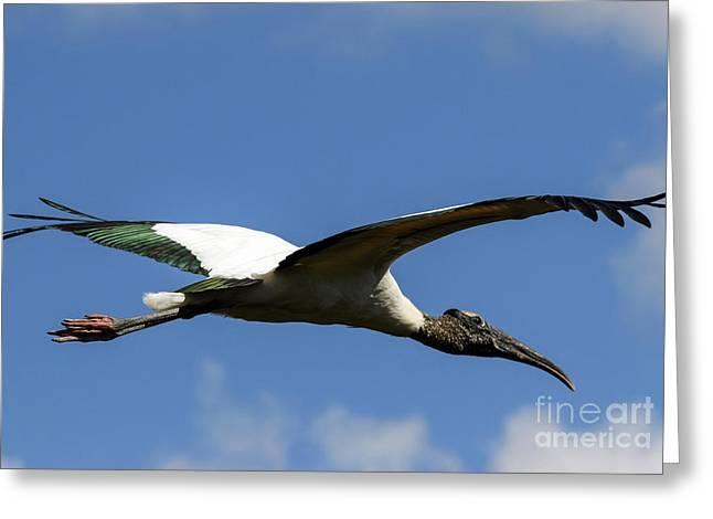 Flying Stork-no Baby Greeting Card