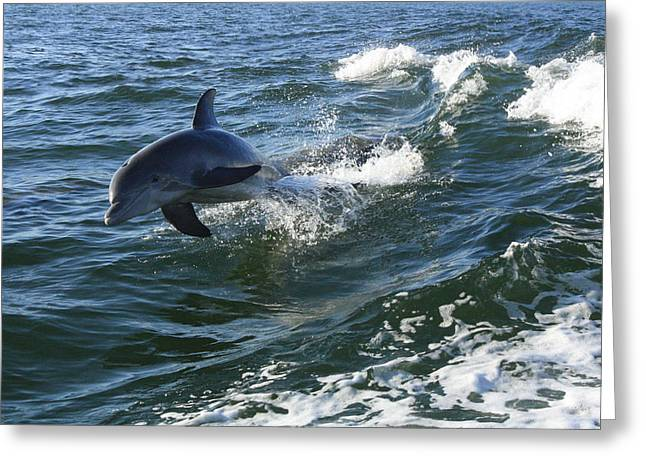 Flying Greeting Card by Tara Moorman Photography