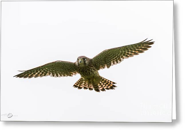 Flying Greeting Card by Torbjorn Swenelius