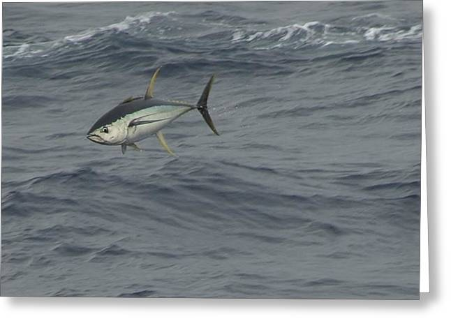 Greeting Card featuring the photograph Flying Tuna by Bradford Martin