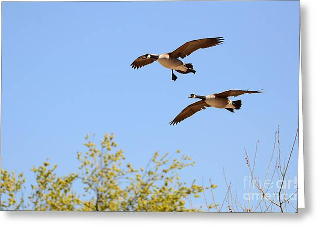 Flying Twins Greeting Card