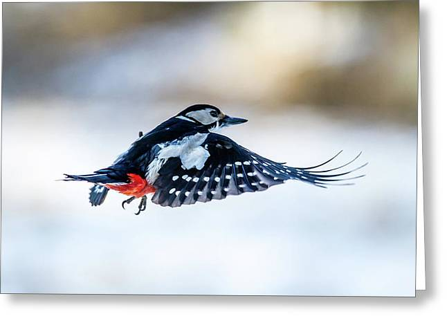 Greeting Card featuring the photograph Flying Woodpecker by Torbjorn Swenelius