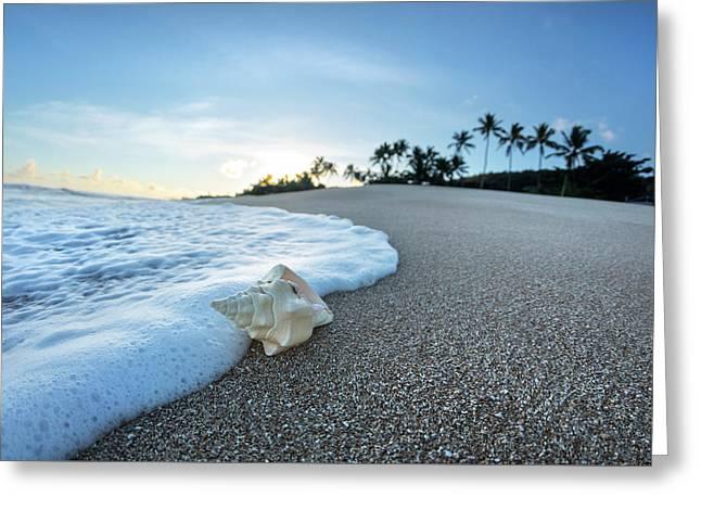 Foam Meets Shell Greeting Card by Sean Davey