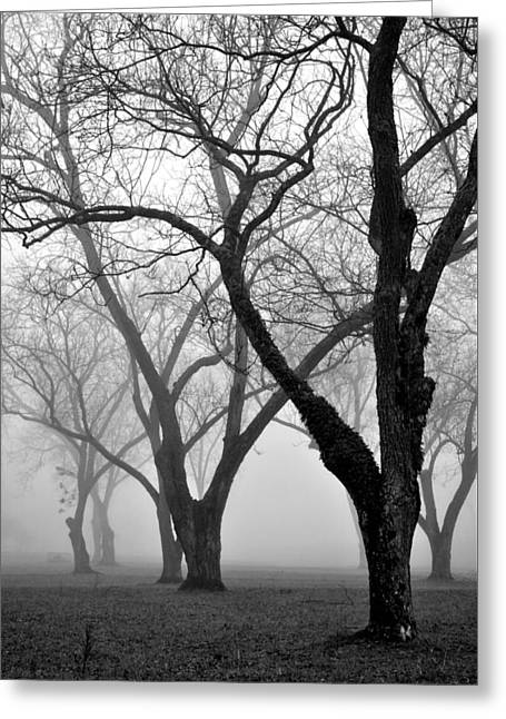 Fog 1 Greeting Card by Beverly Hammond