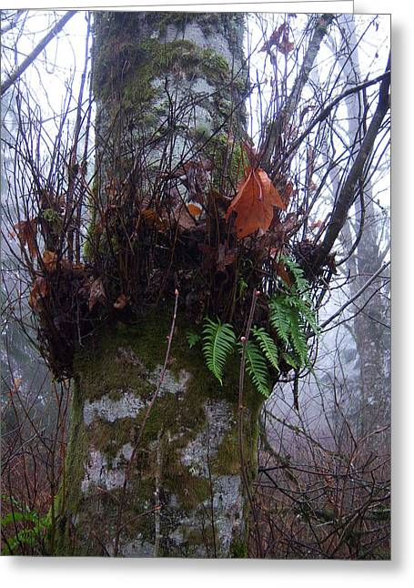 Fog And Ferns Greeting Card by Ken Day