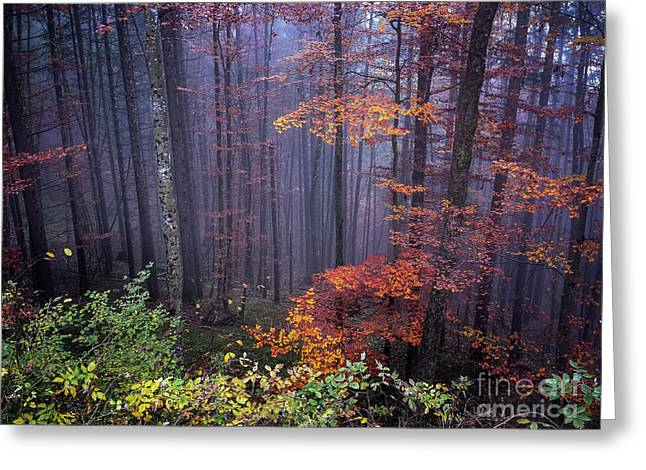 Greeting Card featuring the photograph Fog And Forest Colours by Elena Elisseeva