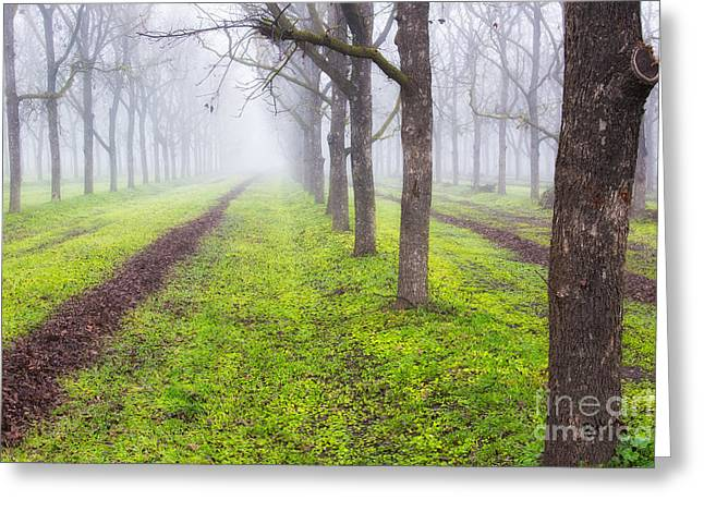 Fog And Orchard Greeting Card