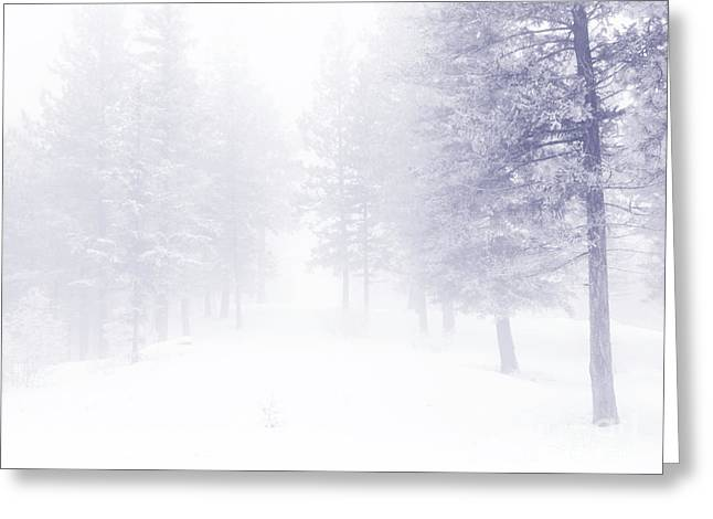 Fog And Snow Greeting Card by Tara Turner
