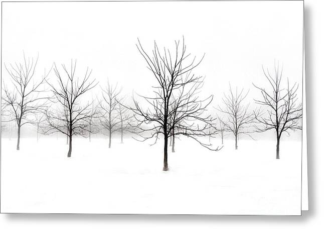 Fog And Winter Black Walnut Trees  Greeting Card
