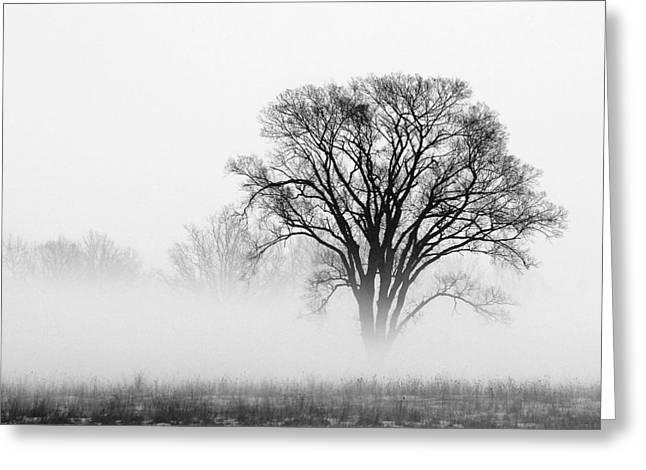 Fog Greeting Card by Elizabeth Reynders