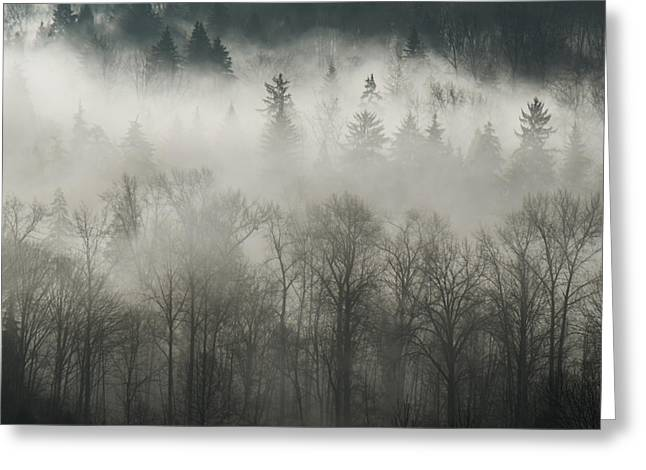 Greeting Card featuring the photograph Fog Enshrouded Forest by Lisa Knechtel