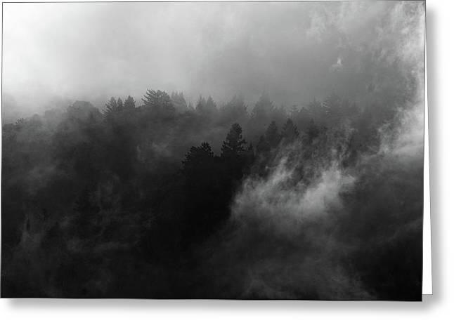 Fog Forest Greeting Card