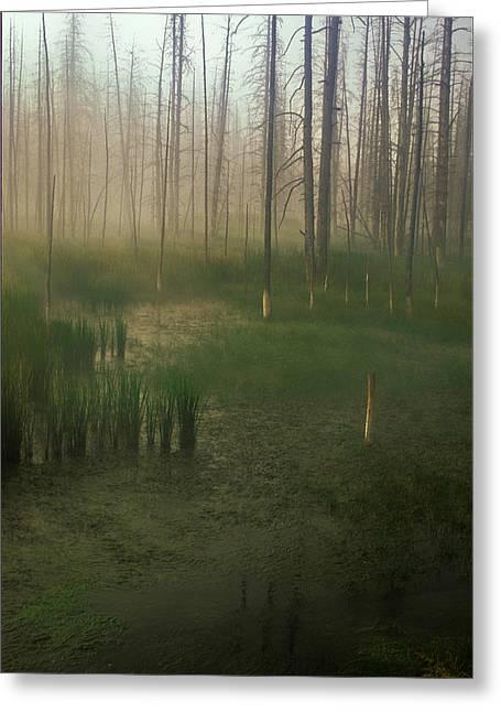 Fog In The Marsh Greeting Card