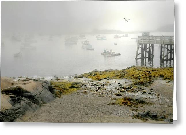 Fog In The Morn Greeting Card by Diana Angstadt